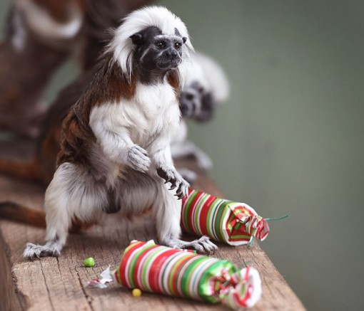 Top 10 Banging Animals Pulling Christmas Crackers
