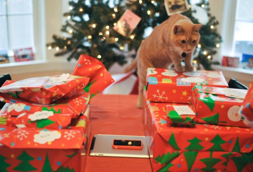 Top 10 Cats Who Can't Wait For Christmas