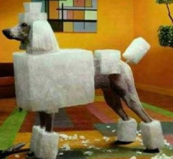Square Groomed Dog