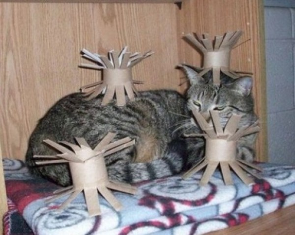Top 10 Trapped And Surrounded Cats