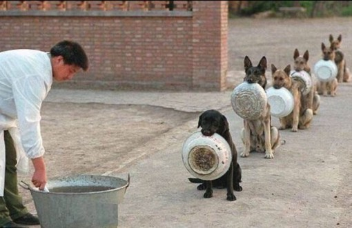 Top 10 Very Patient Dogs Waiting In Lines And Queues