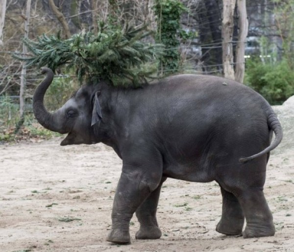 Top 10 Zoo Animals Enjoying Christmas Trees