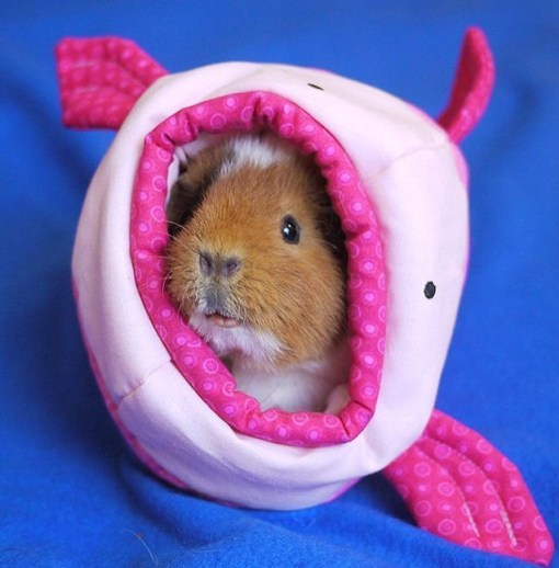 Blobfish Guinea pig House