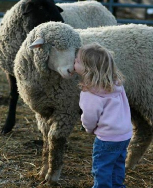 Top 10 Pictures Of Babies Kissing Animals