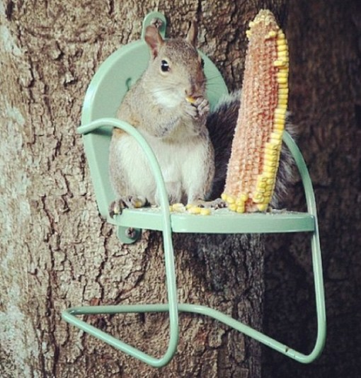 Corn Chair Squirrel Feeder