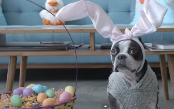 Dog On a Easter Egg Hunt