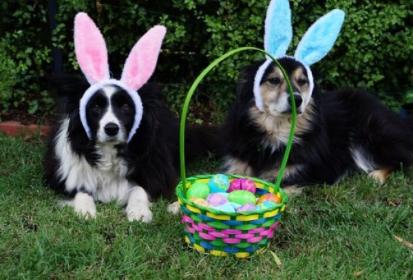 Dogs On a Easter Egg Hunt