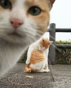 Top 10 Funny and Best Cats Taking Selfies
