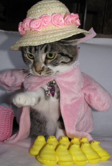 Cat Dressed As Easter Parade Lady