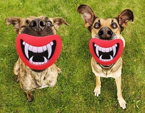 Dogs With False Teeth