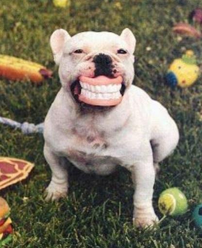 Dog With False Teeth