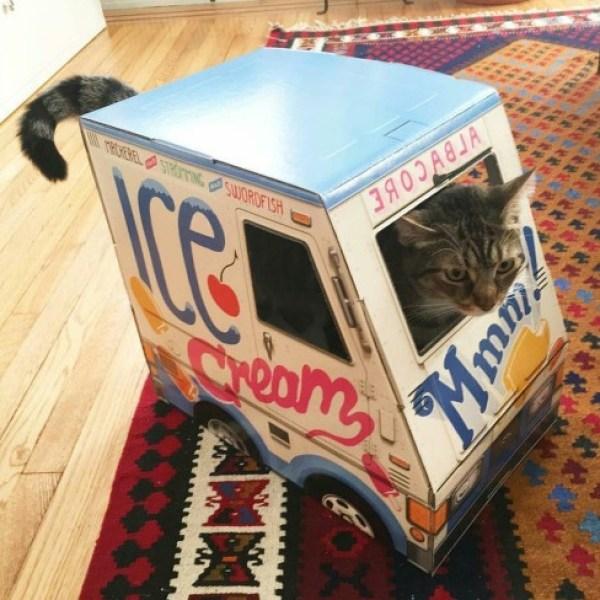Cat Driving An Ice Cream Van