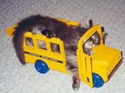 Cat Driving A School Bus
