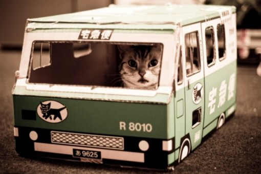 Cat Driving A Bus