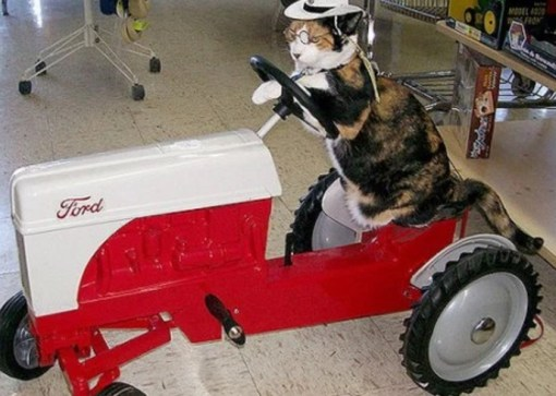 Image result for cat and tractor