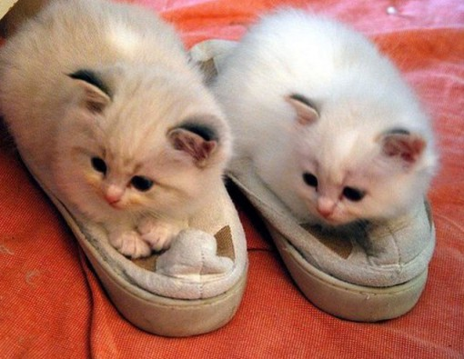 Cats Wearing Slippers