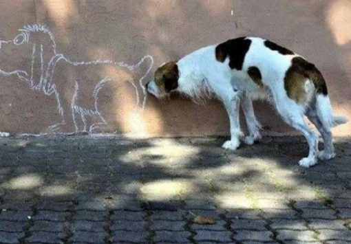 Dog Sniffing Picture Of Other Dog
