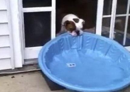 Dog Dragging Pool Inside