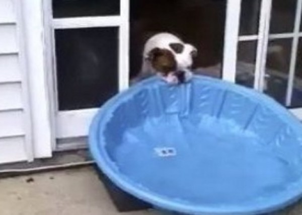 Dog Dragging Pool Inside