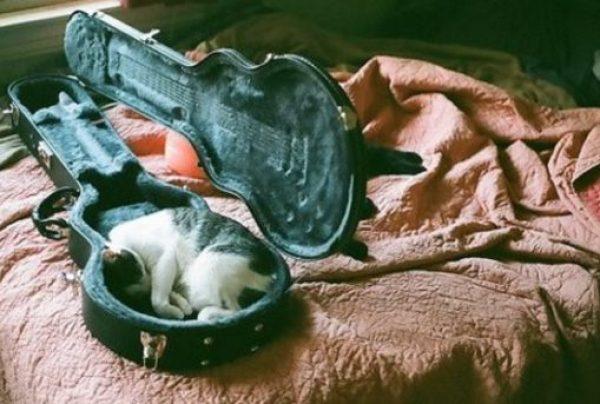Cat Asleep Inside a Guitar Case