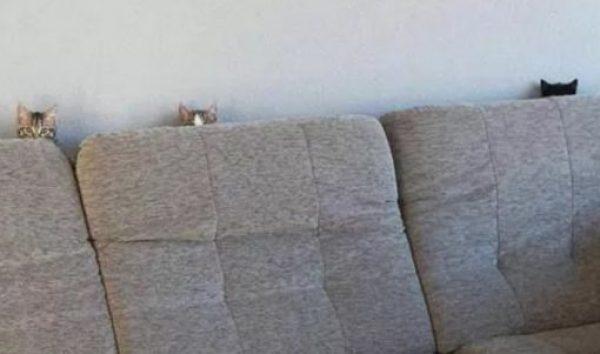 Cats Peeking Over A Sofa