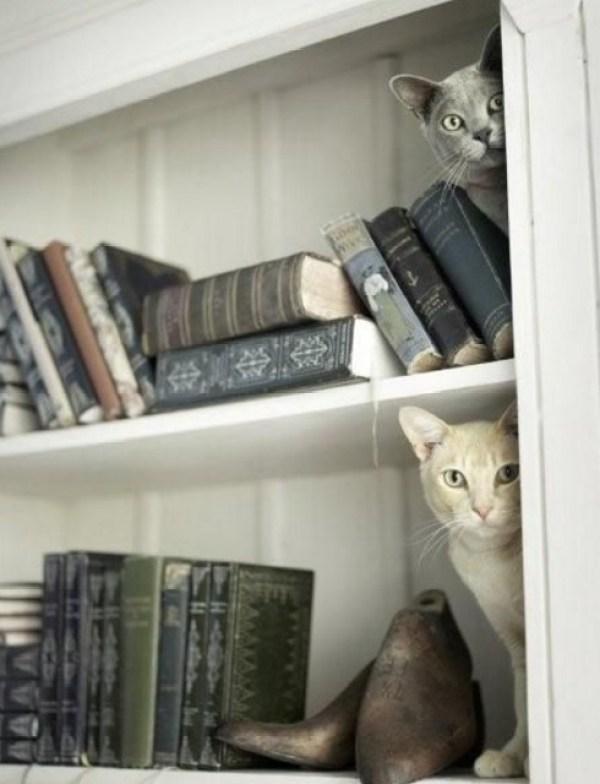 Cat Peeking Around a Corner