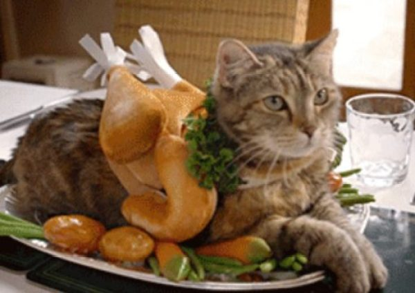 Cat Looks Like a Chicken Dinner