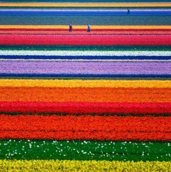 The Tulip Fields, Keukenhof