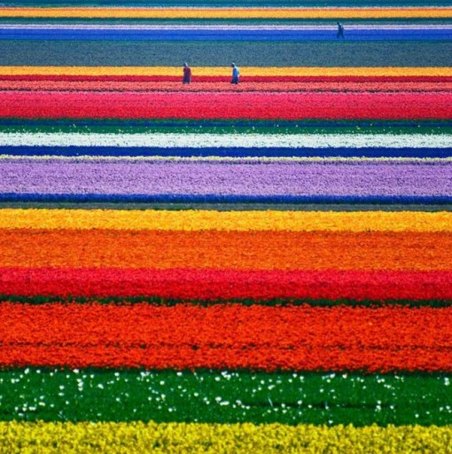 The Tulip Fields, Keukenhof