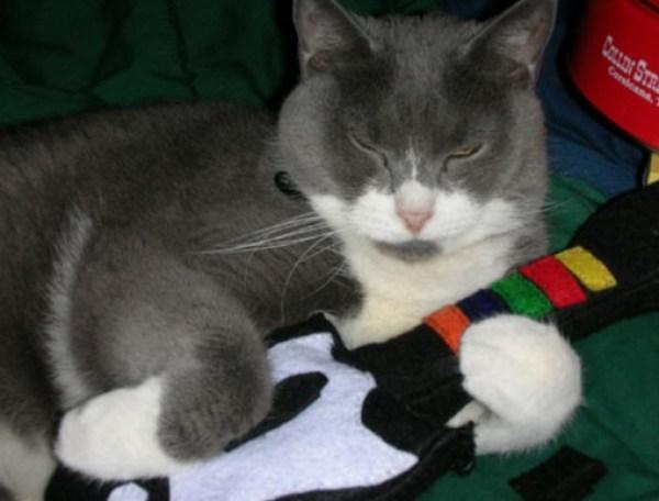 Guitar Hero: Cat Cosplay