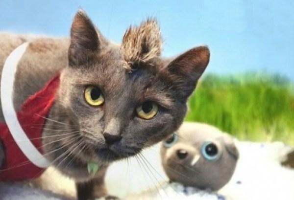 Far Cry: Cat Cosplay