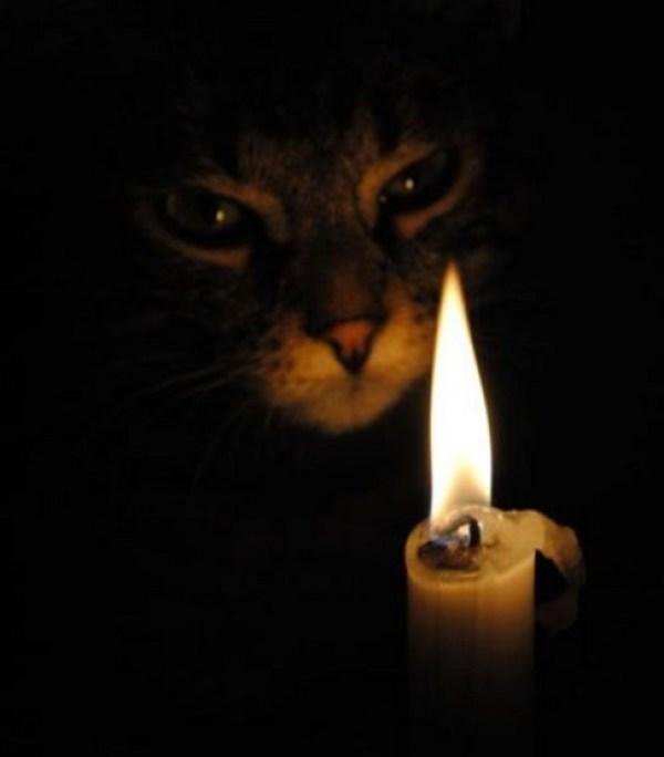 The Elder Scrolls: Cat Cosplay