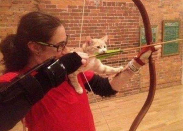 Cat Biting an Arrow