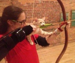 Top 10 Cats About to Learn Valuable Lessons