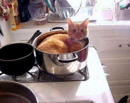 Cat Sleeping In Sauce Pan