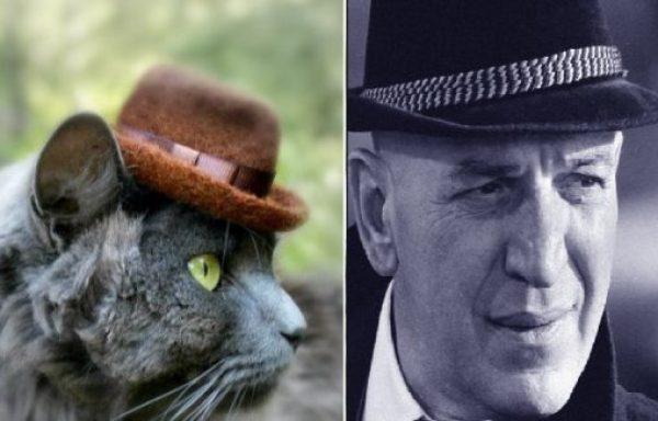 Kojak Cat