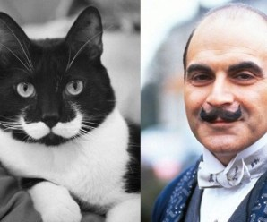 Top 10 Crime Stopping Detective Cats