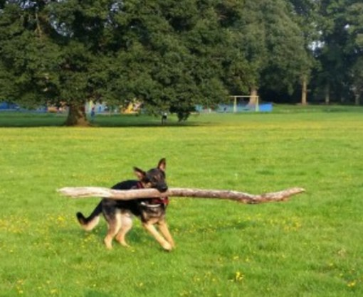 Dog Winning At Fetch