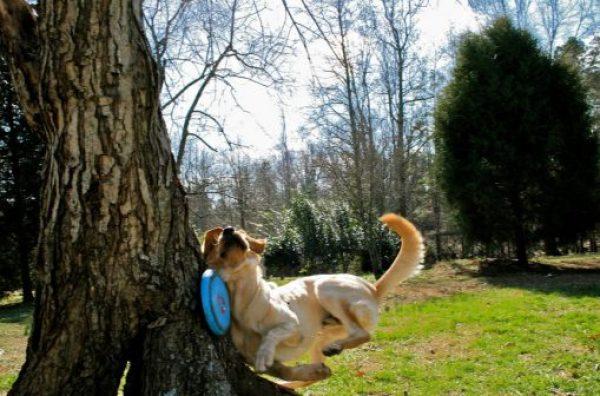Dog Catch Fail
