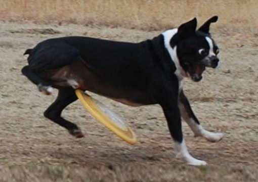 Top 10 Dogs Who Suck at Playing Catch