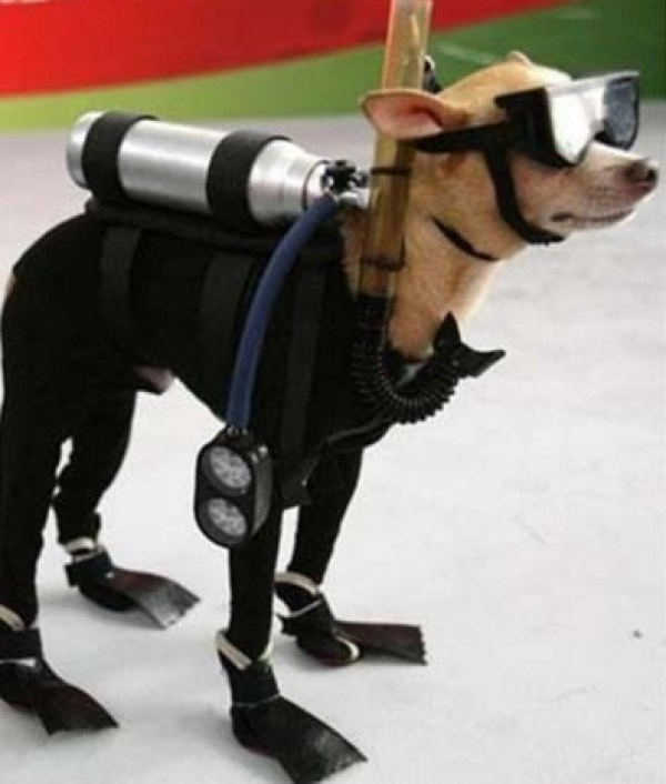 Dog Wearing Diving Safety Equipment