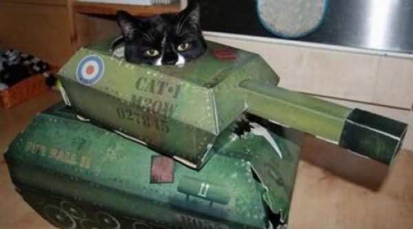 Army Cat With a Tank