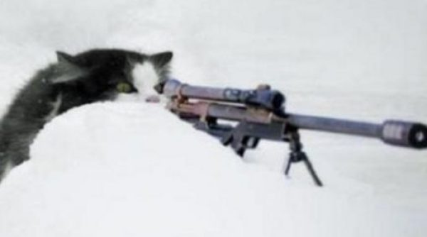 Army Cat With Sniper Rifle