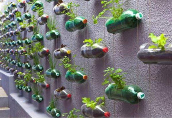 Empty Plastic Pop Bottle Transformed Into Planters