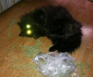 Top 10 Cats Who Have Had Enough Catnip