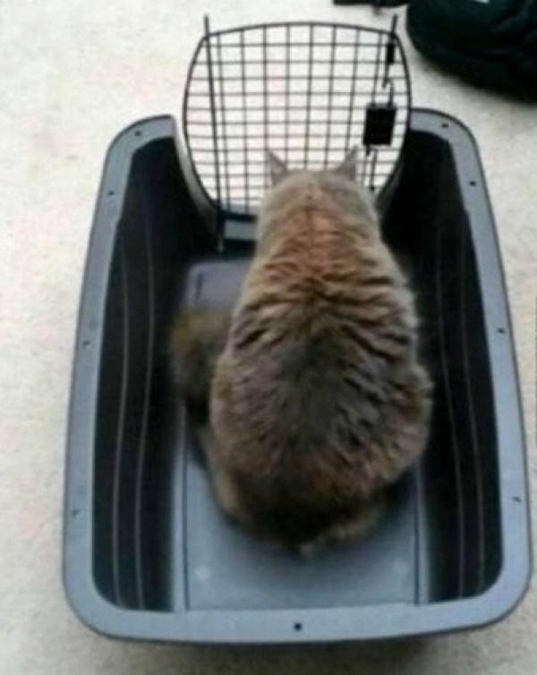 Funny Cat Logic