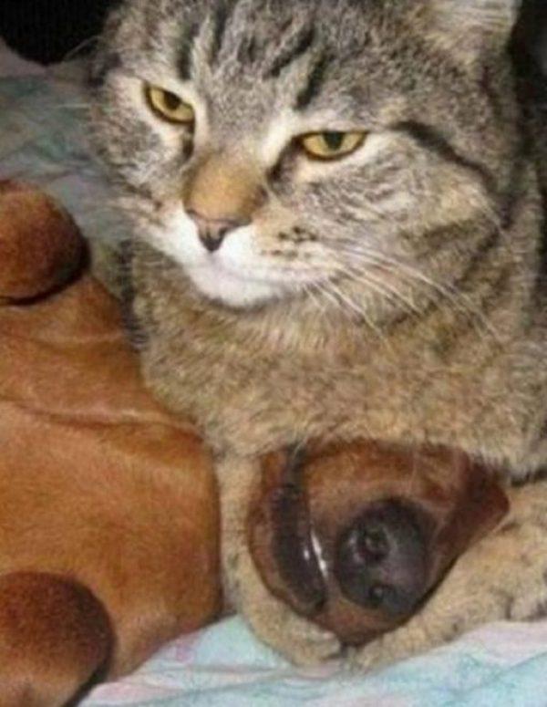 Cat Bullying the Dog