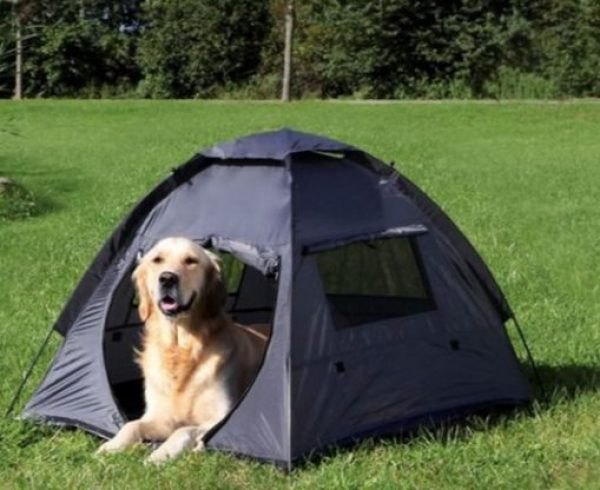 Cool Down Your Dog By Putting a Tent Out