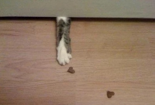Funny Cat Paw