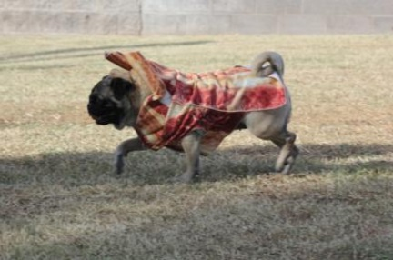 Dog Who Loves Bacon